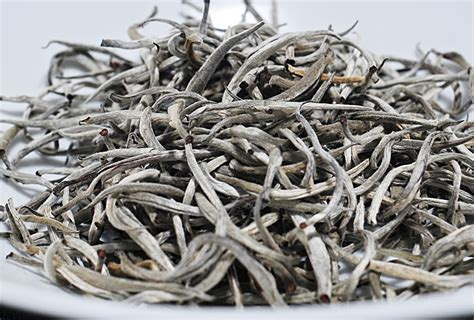Teh Pucuk Paling Kecil kedai teh laresolo khasiat white tea hanya mitos belaka
