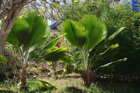 outdoor palm tree l post palm tree choices how to take care of palm trees outdoors