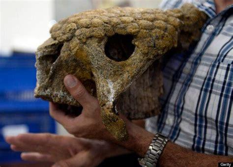 giant armadillo  prehistoric fossil find  venezuela huffpost uk