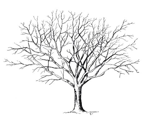 free coloring pages of tree with no leaves