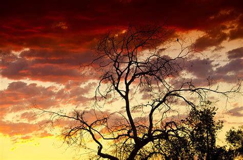 Southwestern L by Southwestern Skies Photograph By Saija Lehtonen