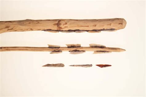 woodworking tools ireland mesolithic mount sandel a mesolithic csite