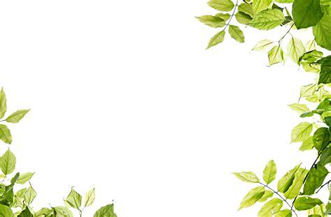 green leaves png image veerendra vijaya pinterest free download leaves frame transparent png image free