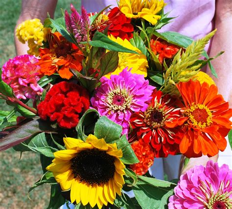 flower cut