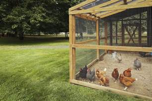 can i keep chickens in my backyard how to legalize owning chickens in your community