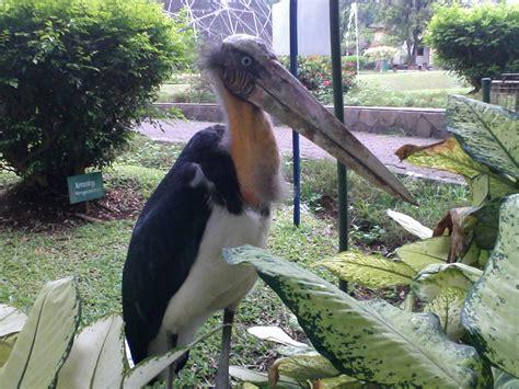 Pakan Ikan Lele Murah Meriah liburan murah meriah gembira part 2 taman burung taman