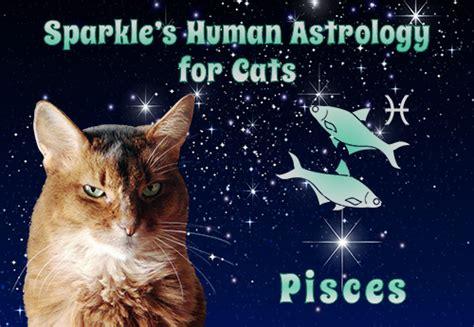 sparkles human astrology  cats pisces sparklecat