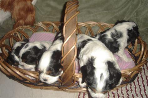 4 week puppy image 4 week puppy