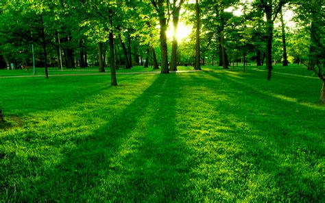 green grass park day wallpapers and images