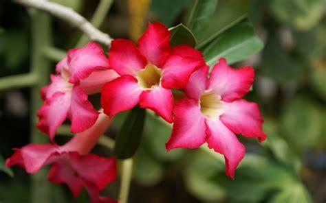 imagenes de flores exoticas para descargar im 225 genes de flores ex 243 ticas para descargar ramos de flores