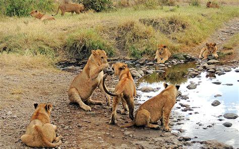 lincoln park and go go cubs go lincoln park zoo