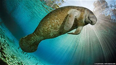 imagenes de la vida marina bbc mundo noticias en fotos la belleza de la vida marina