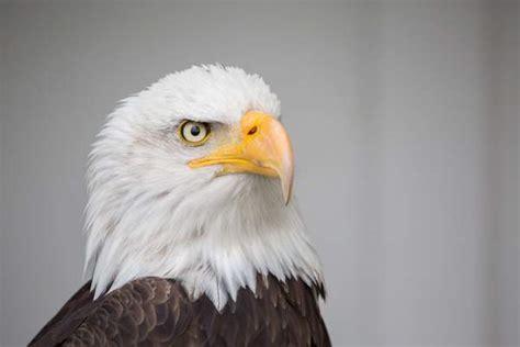 save  eagles day national  international days