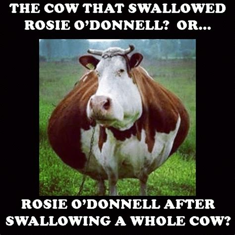 Cow Memes - cow memes 28 images judge reprimands jury for laughing