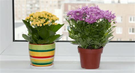 menanam bunga   ruangan indoors petani bunga