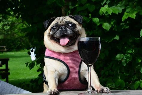national wine day    celebrate miami food pug