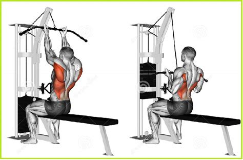 Lever Weight Bench Upper Back Exercises Beginners Guides To A V Shaped