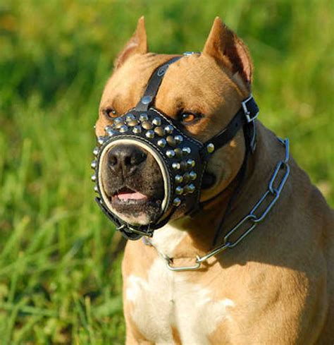 best for pit royal pyramids with studs leather muzzle for pitbulls