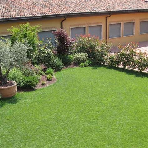 erba da giardino a rotoli prezzi prato erboso in rotoli dicondra bsvillage