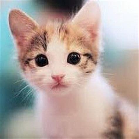 gambar kucing imut atgambarkucing twitter