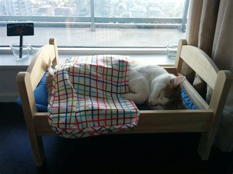 ikea cat bed top 10 best cat beds that will make you go i must have