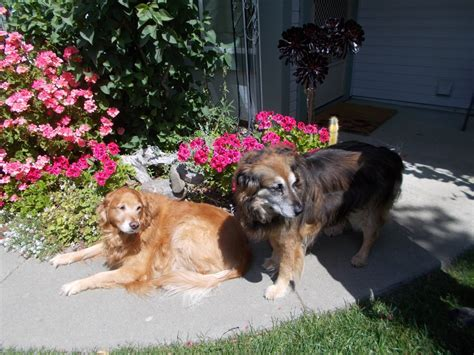 overnight kennels near me happy at home pet sitting service kennels pet sitting vacaville ca united