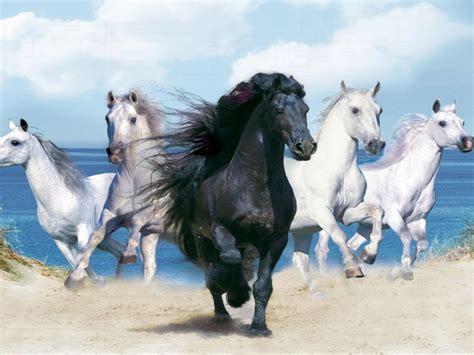 beautiful background  animals hd  black horse   white horses wallpaperscom