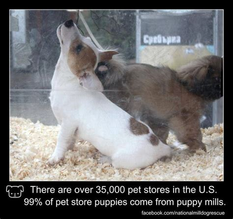 pet stores in chicago that sell puppies 1000 images about puppymills and there poor dogs on puppy mills pet