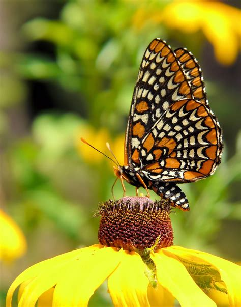 Sustainable Home Design Plans by The Harmful Effect Of Herbicides On The Habitat Of Monarch