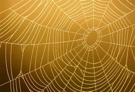 spider web photos weneedfun image gallery spiderweb