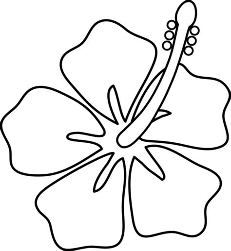 flowers line drawing images clipart best hibiscus flower line art free clip art