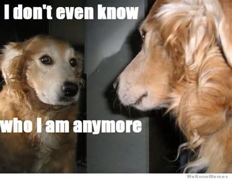 Sexy Dog Meme - 25 funny dog memes weknowmemes