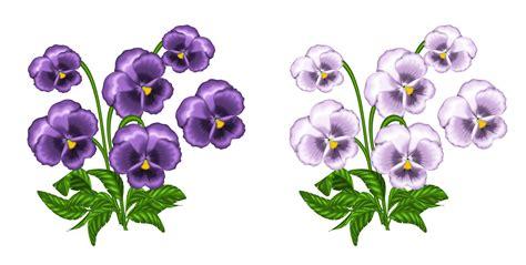 violet clipart white violet clipart clipground