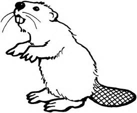 beaver color oregon state beaver coloring pages