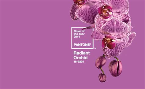 colour of the year radiant orchid pantone color of the year 2014 is radiant orchid another