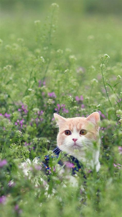 animal iphone  wallpapers hd part  cute cat iphone
