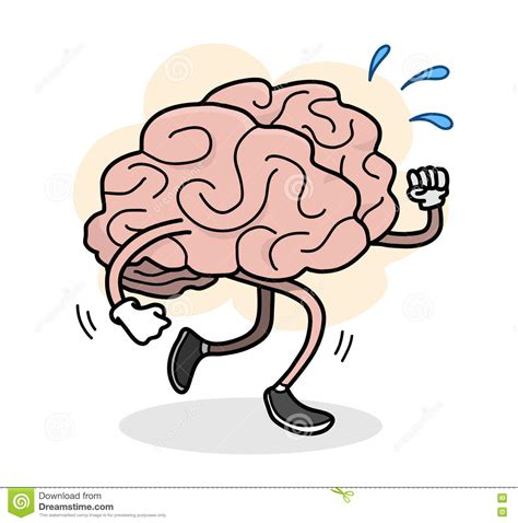 brain clipart brains clipart excercise pencil and in color brains