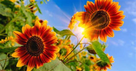 define full sun  gardening gardeners path