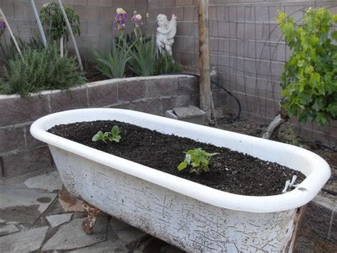 Bathtub Planter by 1000 Images About Bathtub Planters On