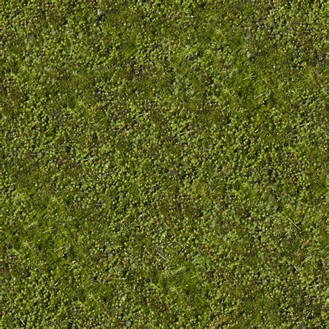 moss  background texture moss green seamless