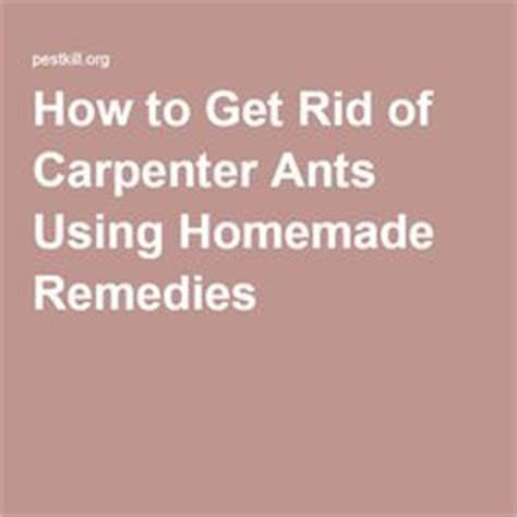 how to get rid of carpenter ants in bathroom home ants and home remedies on pinterest
