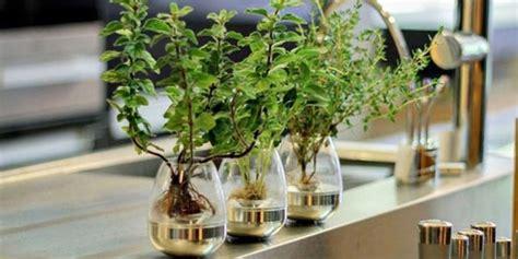 Spray Ruangan Aroma Dupa Khas Timur Tengah 5 keuntungan saat memelihara tanaman di dalam ruangan