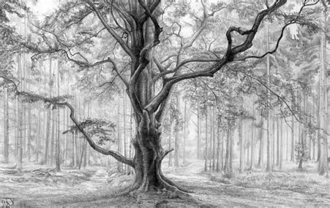 drawing themes on nature nature drawings 39 magnificent pictures for coloring ideas