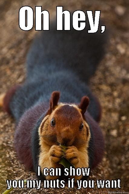 Saucy Memes - saucy squirrel quickmeme