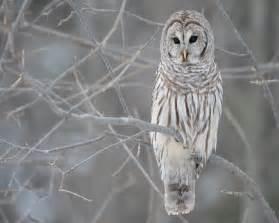 owl wallpaper for macbook 1280x1024 owl in a tree desktop pc and mac wallpaper