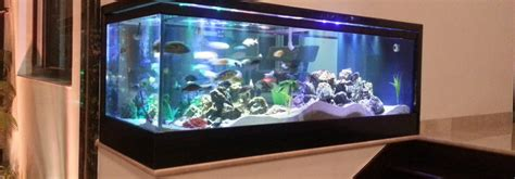 design your aquarium online best custom aquarium company in india