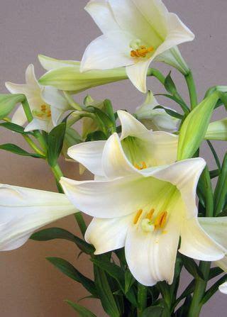 le lys de brooklyn fleurs d 233 t 233 fressia et lys blanc le pouvoir des fleurs