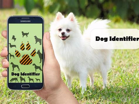 breed identifier app breed identifier identify breed by characteristics with app