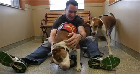 therapy dogs for ptsd ptsd therapy dogs