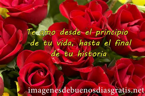 imagenes de rosas rojas con frases bonitas encantadoras rosas rojas de amor imagenes de buenos dias